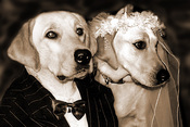 dog-wedding10.jpg