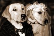 dog-wedding10.jpg