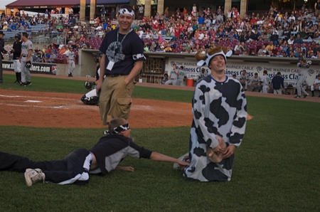 timber rattlers -- cow tip attempt.JPG