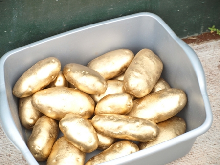 Idaho Falls -- Gold Potato Trophies.JPG