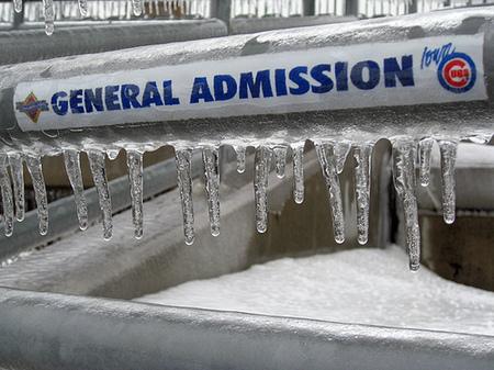 icecubs2.jpg