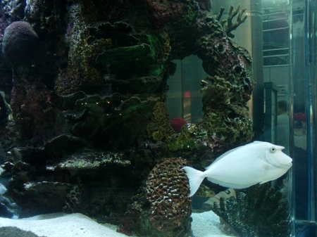 Staten_aquarium.JPG